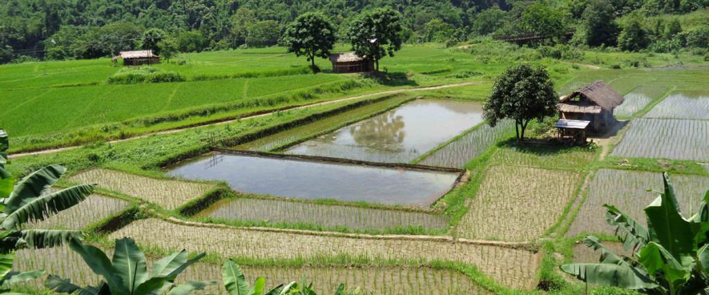 Riangluang-field2